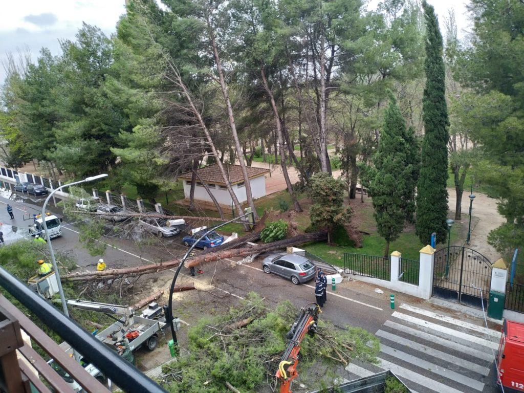 FOTOS | Hasta una quincena de árboles caen en Albacete debido a las fuertes lluvias
