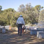 UPA pide que se priorice la apicultura en la orden de incorporación y mejora para las explotaciones agrarias