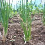 Casi 60 millones de indemnizaciones agrarias en la provincia de Albacete
