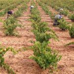 El Plan de Empleo en Zonas Rurales Deprimidas contempla un presupuesto en Albacete de cerca de tres millones de euros para contrata a 597 trabajadores