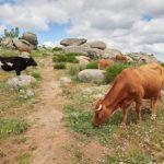 Más de 18 millones de euros llegan a agricultores y ganaderos en zonas de montaña o con limitaciones naturales