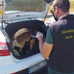 La Guardia Civil detiene a dos personas e interviene 1.000 dosis de polen de hachís