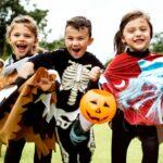 Recomendaciones a la hora de adquirir artículos para la celebración de 'Halloween'