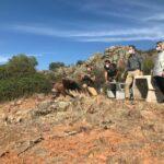 10 buitres leonados se reincorporan al medio natural de la provincia de Albacete